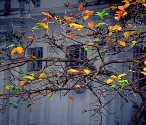 Hà Nội đã bắt đầu chuyển sang mùa thu
